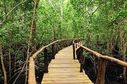 Zanzibar-Jozani_Forest2.jpg
