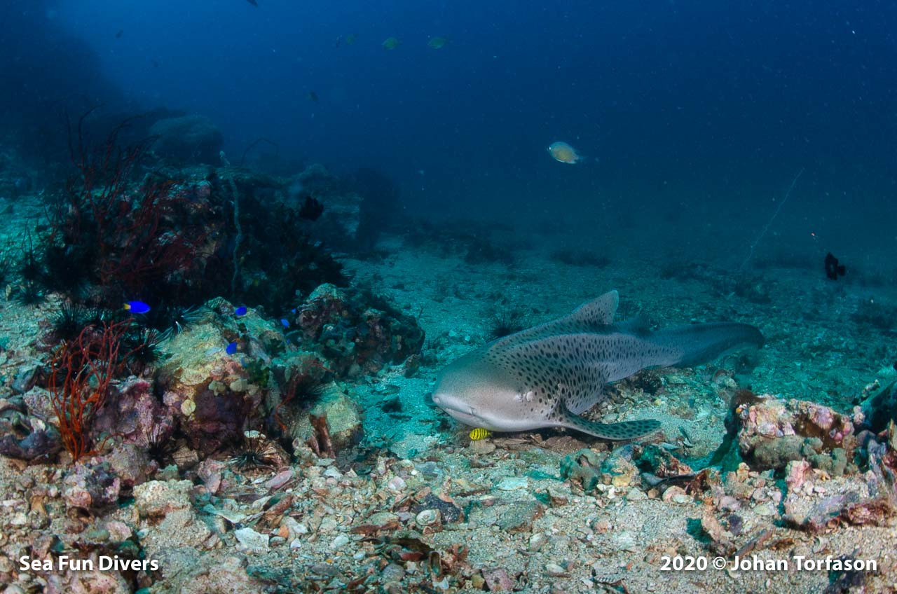 shark point.jpg