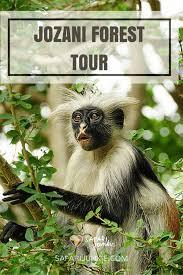 Zanzibar-Jozani_Forest5.jpg