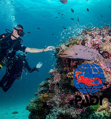 PADI SCUBA DIVER COURSE - Thailand, Simple Life Divers
