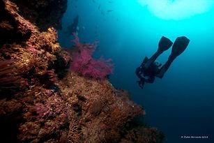 Jardim-das-Gorgonias-Amazing-dive-corals