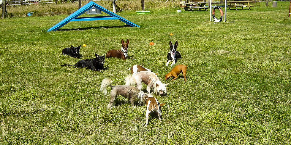 Obedience/Activity Classes