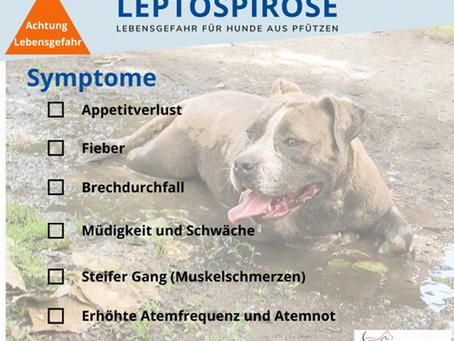 LEPTOSPIROSE - LEBENSGEFAHR FÜR HUDNE