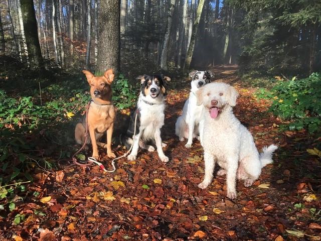 Hundezentrum Ammann / Hundeschule