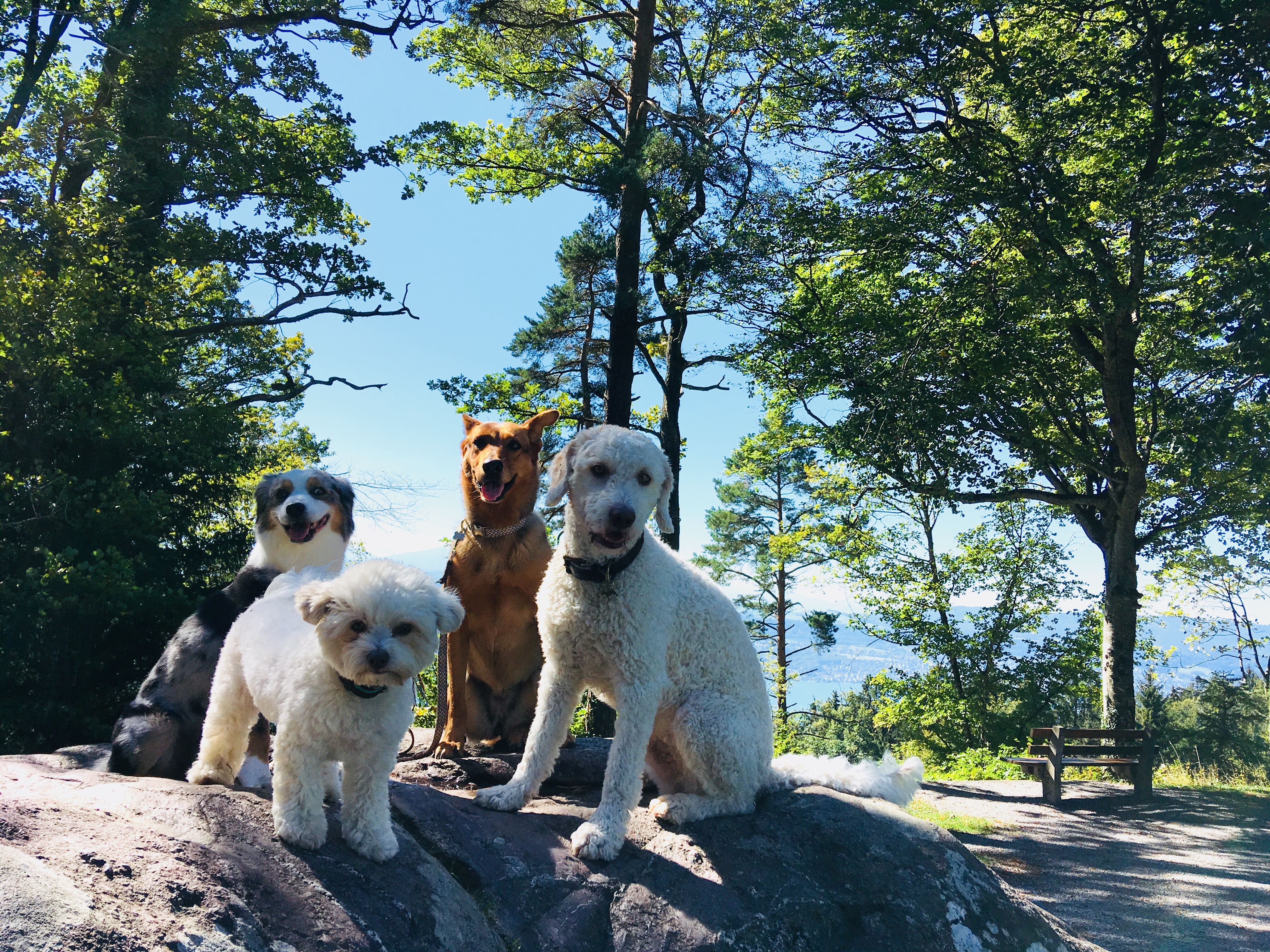 Hundeschule und Betreuung