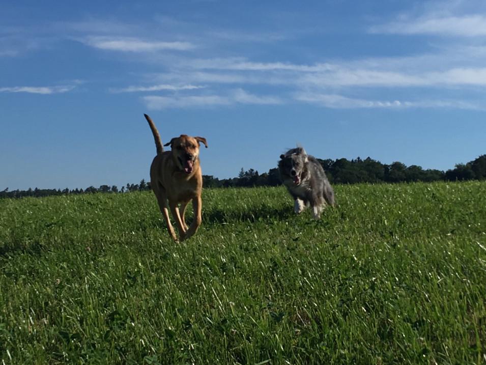 Shory & Merlin