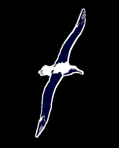 albatross-03.png