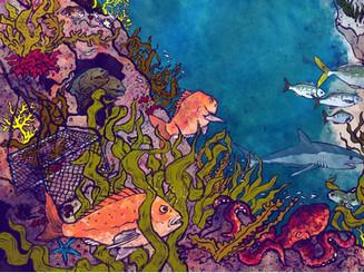 'Shag Point' book illustrations