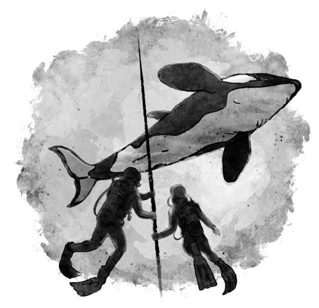 orca4light.jpg