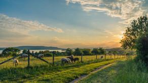 Regenza® definition for regenerative NZ pastoral farming