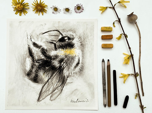 Bumblebee #02 charcoal drawing on paper  - 210mm x 210mm
