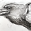 Thumbnail: Raven charcoal drawing on paper  #04 - A5 148mm x 210mm