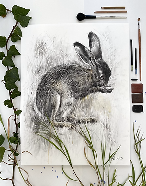 Shy Hare - Mixed media and charcoal drawing on paper - 50cm x 65cm