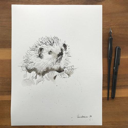 Hedgehog - Ink and Wash drawing