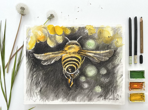 Honey Bee charcoal and Watercolour painting on paper  - 240mm x 300mm
