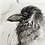 Thumbnail: Raven charcoal drawing on paper  #02 - A5 148mm x 210mm