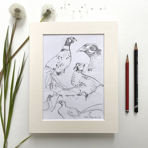 Pheasant studies #02 - pencil drawing on paper - A5, 148mm x 210mm