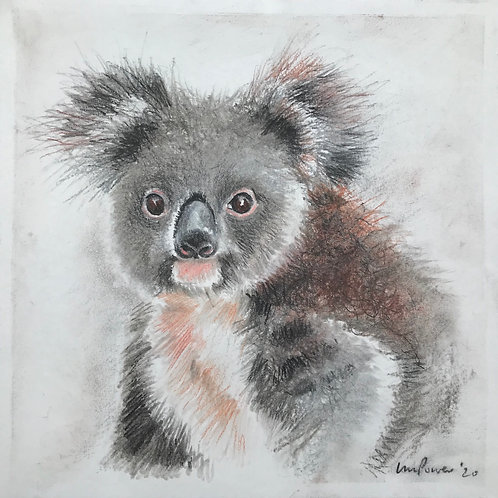Koala charcoal drawing #05 - Koala's for FNPW funds, a series of 8