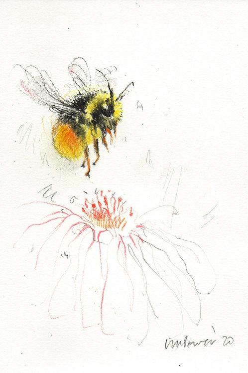 Bumblebee #10 - Charcoal & pencil Bee drawing