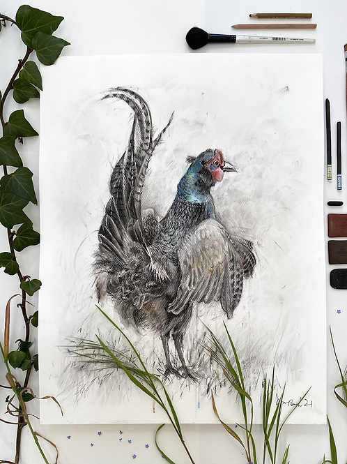 A Ruffled Pheasant - Mixed media and charcoal drawing on paper - 50cm x 65cm