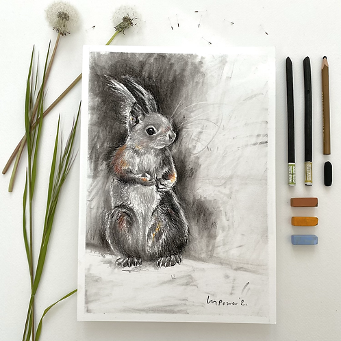 Red Squirrel - charcoal drawing on paper - A4, 295mm x 210mm