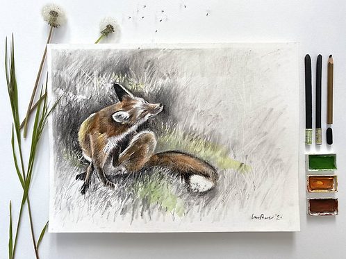 Itchy Fox, charcoal and Watercolour painting on paper  - 400mm x 300mm