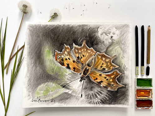 Comma Butterfly, charcoal and Watercolour painting on paper  - 240mm x 300mm