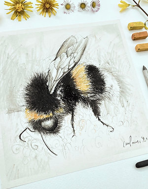 Bumblebee #03 charcoal drawing on paper  - 210mm x 210mm