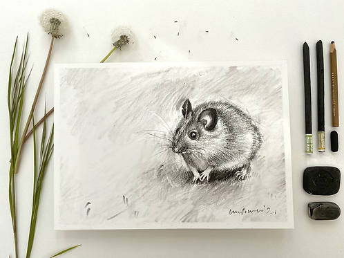 Mouse - charcoal drawing on paper - A4, 295mm x 210mm