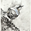 Thumbnail: Nuthatch - charcoal drawing on paper - A4, 295mm x 210mm