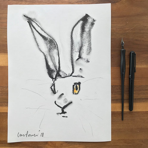 Hare #38 - ink drawing with watercolour