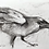 Thumbnail: Raven charcoal drawing on paper  #05 - A5 148mm x 210mm