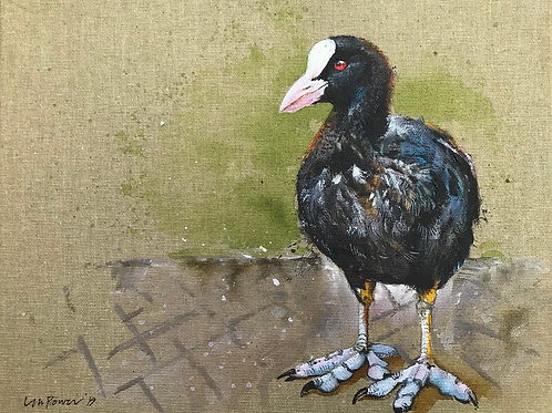 'Coot' - Waterbird painting on unbleached canvas