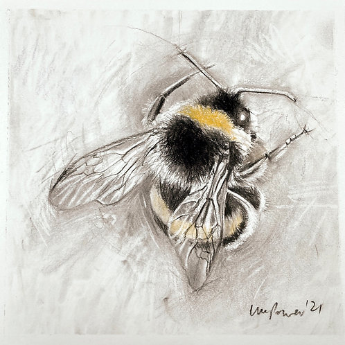 Bumblebee #01 charcoal drawing on paper  - 210mm x 210mm
