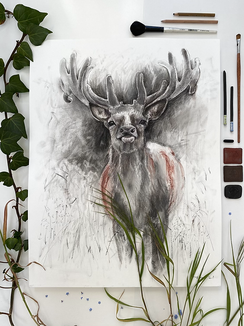 Red Stag - Mixed media and charcoal drawing on paper - 50cm x 65cm