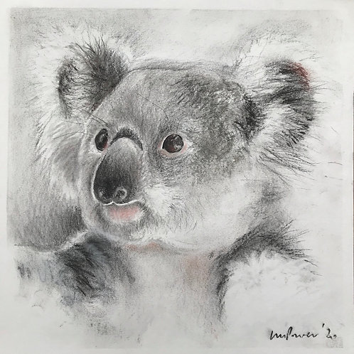 Koala charcoal drawing #03 - Koala's for FNPW funds, a series
