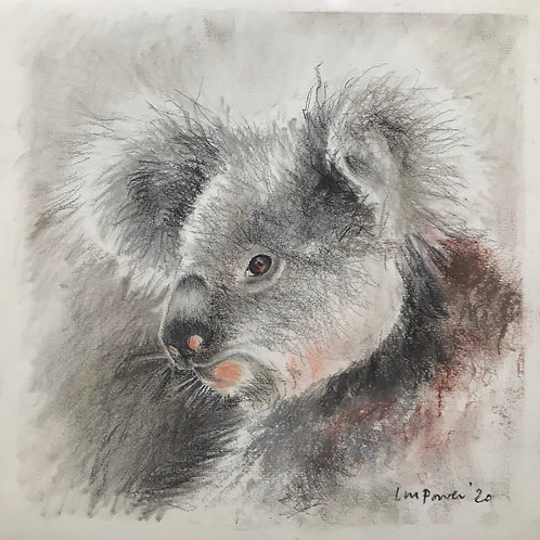 Koala for funds - charcoal drawing #02