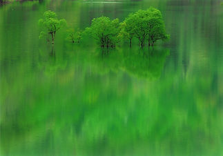 入選「緑の湖面」.jpg