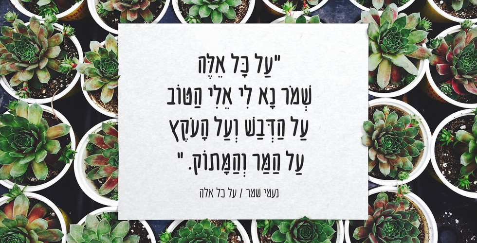 dishmish_sample_nikud.jpg