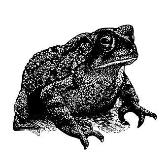 Toads album cover standard.jpg