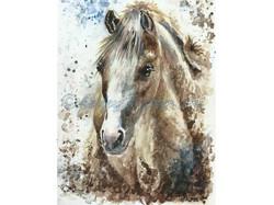 'Pandora's Pony'