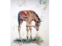 'Itchy Nose Foal'