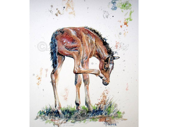 ITCHY NOSE FOAL
