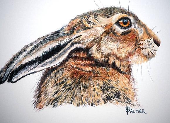 Half Mast Hare