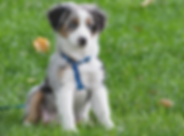 Puppy 101 (8).png