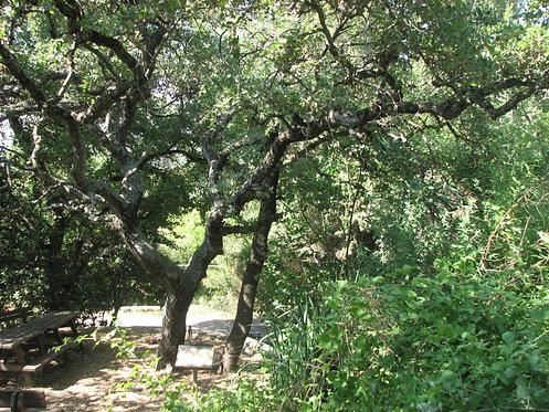 מנביטה לבגרות - עצים בגינה הביתית