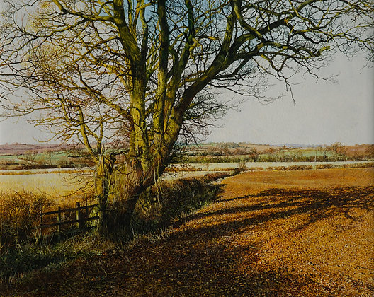 MARTIN TAYLOR | Autumn Gold