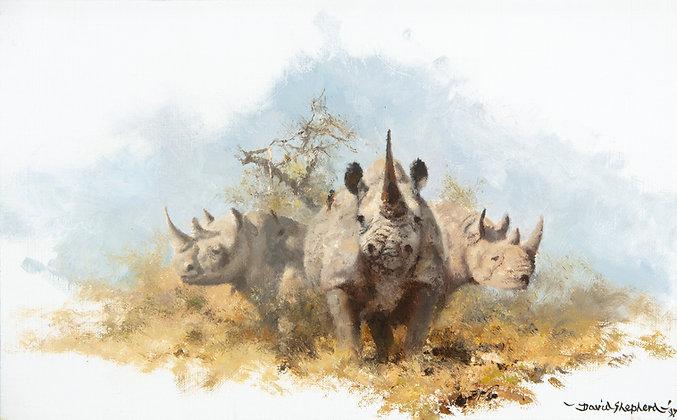 DAVID SHEPHERD | Rhinos
