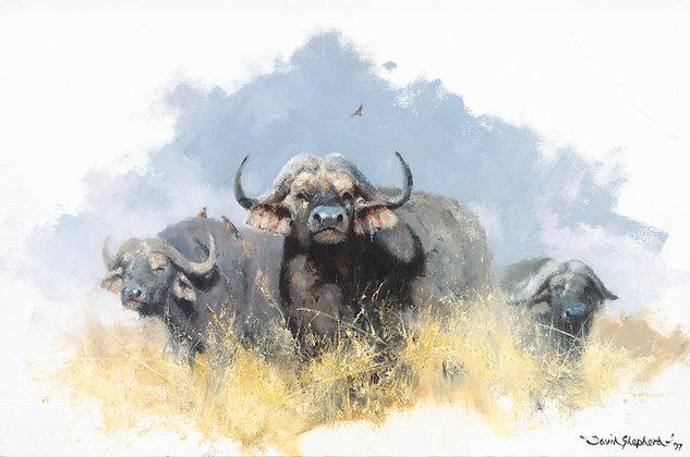 DAVID SHEPHERD   Three Buffalo