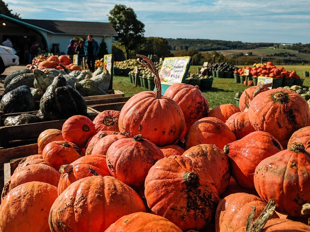 Pumpkins for sale in the fall at Bill's Farm Market in Petoskey, Michigan.